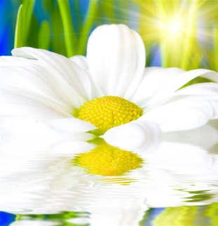 Floral 005 Margarida.jpg