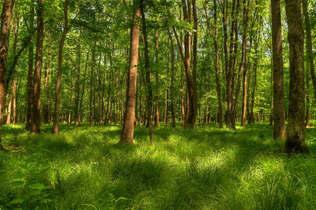Floresta Natureza 390.jpg