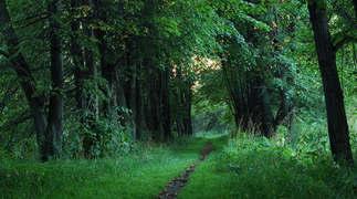 Floresta Natureza 258.jpg