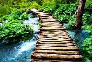 Natureza 006-Caminho de madeira.jpg