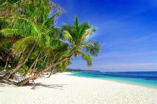 Praia 132Palmeiras e areia branca.jpg