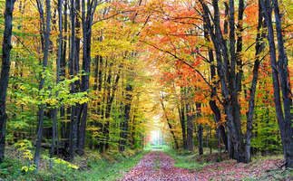 Floresta Natureza 121.jpg
