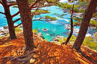 Floresta Natureza 238.jpg