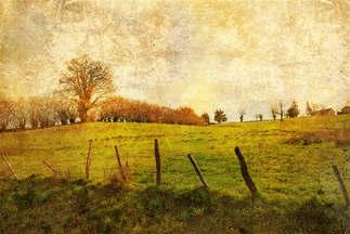 Natureza 033-Imagem vintage do campo.jpg