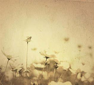 Floral 036.jpg