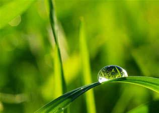 Natureza 059-Gota de orvalho na grama.jpg