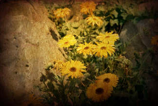 Floral 031-Gerbera amarela.jpg