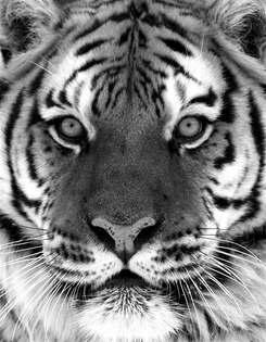 Animais 004 preto e branco.jpg