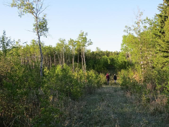 Western Manitoba habitat no birds.jpg