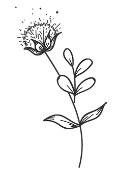 Plantas 2.png