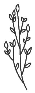 Plantas 13.png