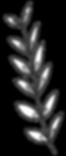 Plantas 12.png