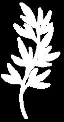 Plantas 23.png
