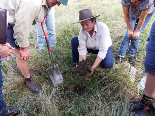 'Understanding Our Soils - Beef Cattle' Workshops