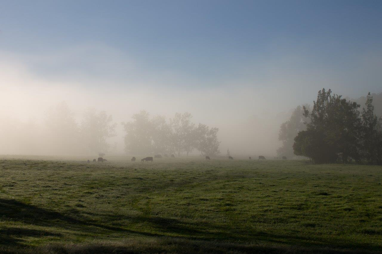 Foggy morning | Lyncoranne Angus