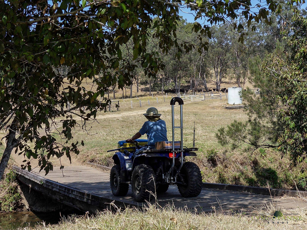 Quad bike bar and helmet | Lyncoranne Angus