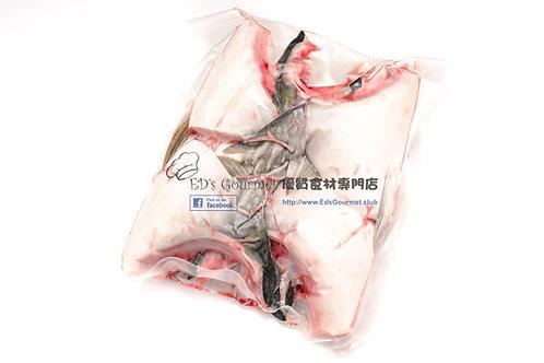日本油甘魚鮫