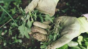 Create A Garden For Mother Earth
