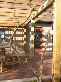 studio patio