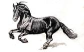 black horsey.jpg