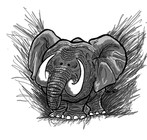 cute elephant color.jpg