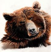 bear color.jpg