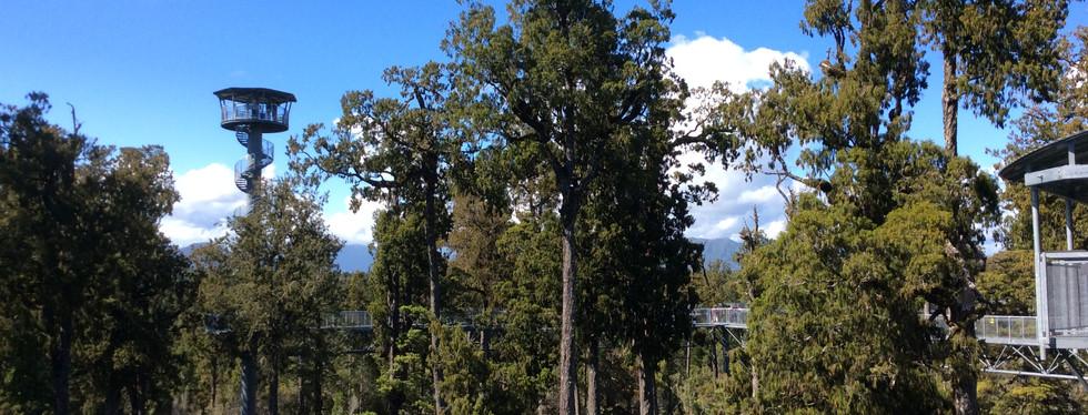 Treetop_Walkway_Hokitika_3.JPG