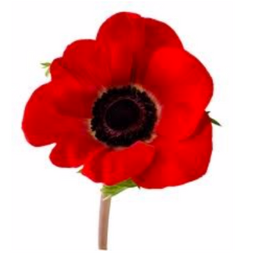 Remembrance Sunday 8th November