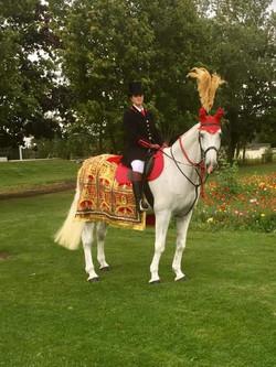 white wedding Horse
