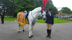 Indian Wedding Horse Manchester