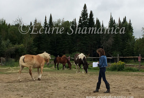 Remote Sessions with horses
