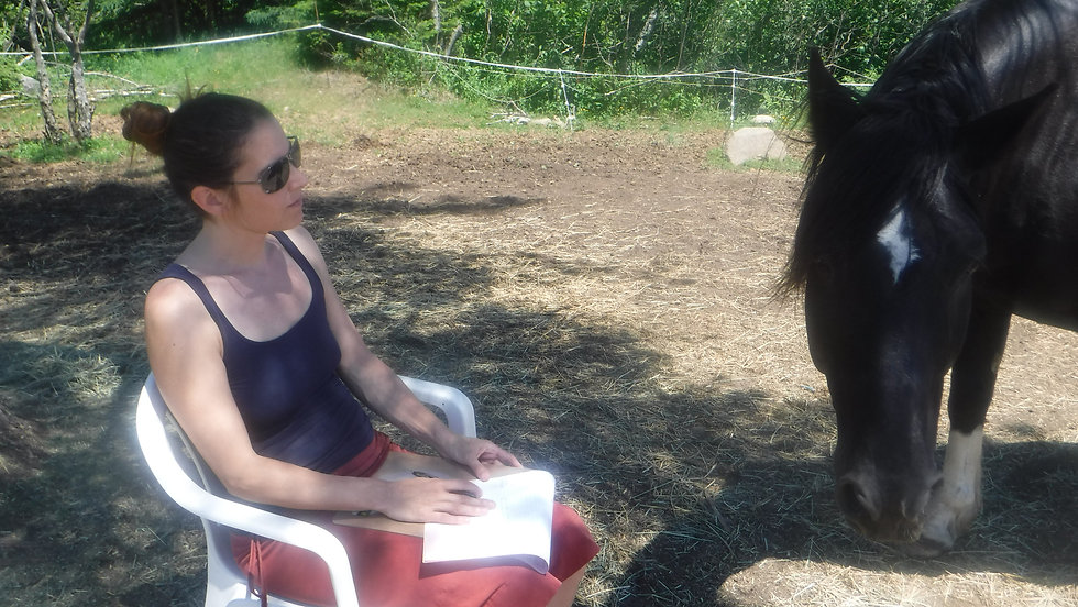 Equine assisted Mindfulness