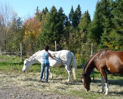 Atelier méditation avec les chevaux