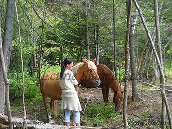 Atelier de méditation avec les chevaux