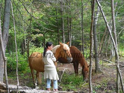 Life Path Coaching Through the Horses' Eyes