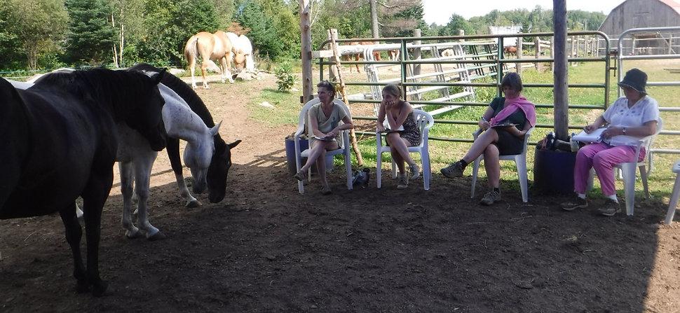Ateliers pleine conscience avec les chevaux- Écurie Shama