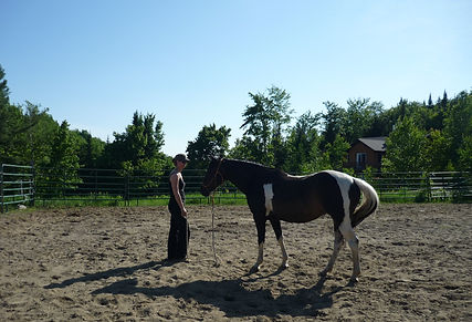 Coaching with horses 2012