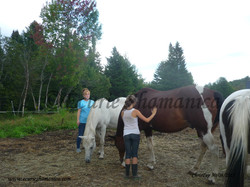 Atelier avec les chevaux