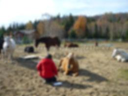 Ateliers avec les chevaux
