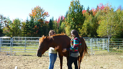 Group workshops-coaching with horses