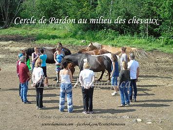 Écurie Shamanica Cercle de Pardon au milieu des chevaux