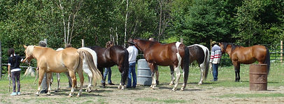 Coaching with horses-Workshops