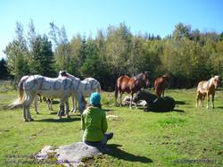 Atelier chevaux/Workshop horses