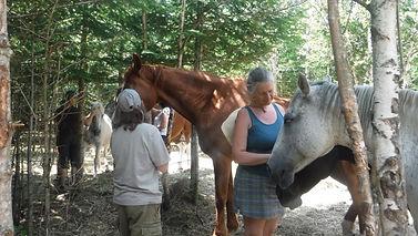 Coaching avec les chevaux ecurieshamanic