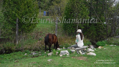 Meditate with horses - Écurie Shamanica Through the Horses' Eyes