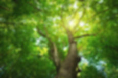 Tree Background 01.jpg