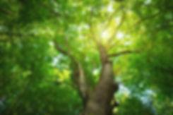 Tree Background 01.jpg