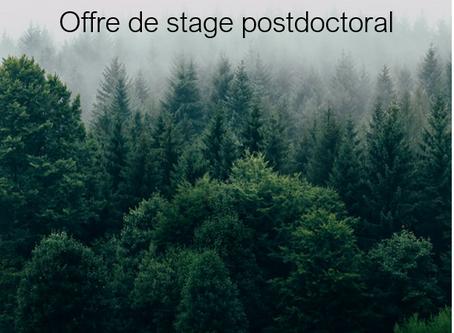 Offre de stage postdoctoral