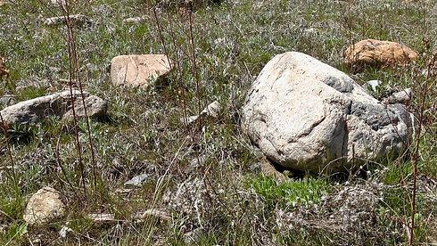 Prairie Rattlesnake 042319 - 2.jpg