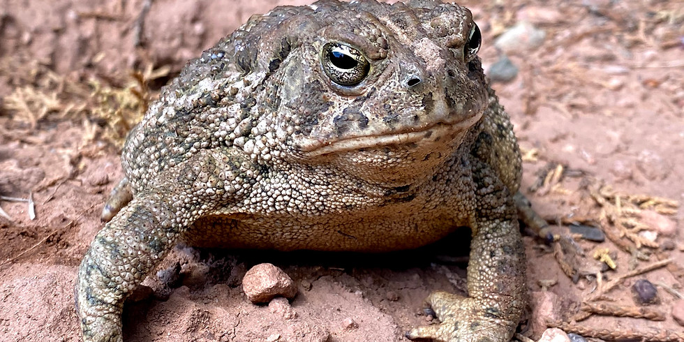 Frogs and Toads - June 7 through June 10